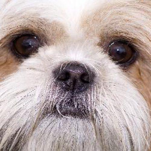 Pet Dog 1