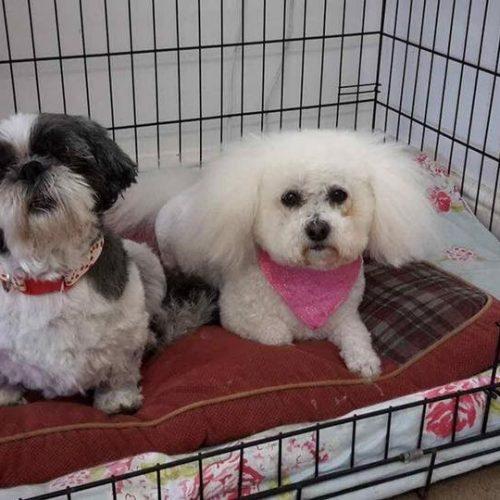 Tilly & Poppy